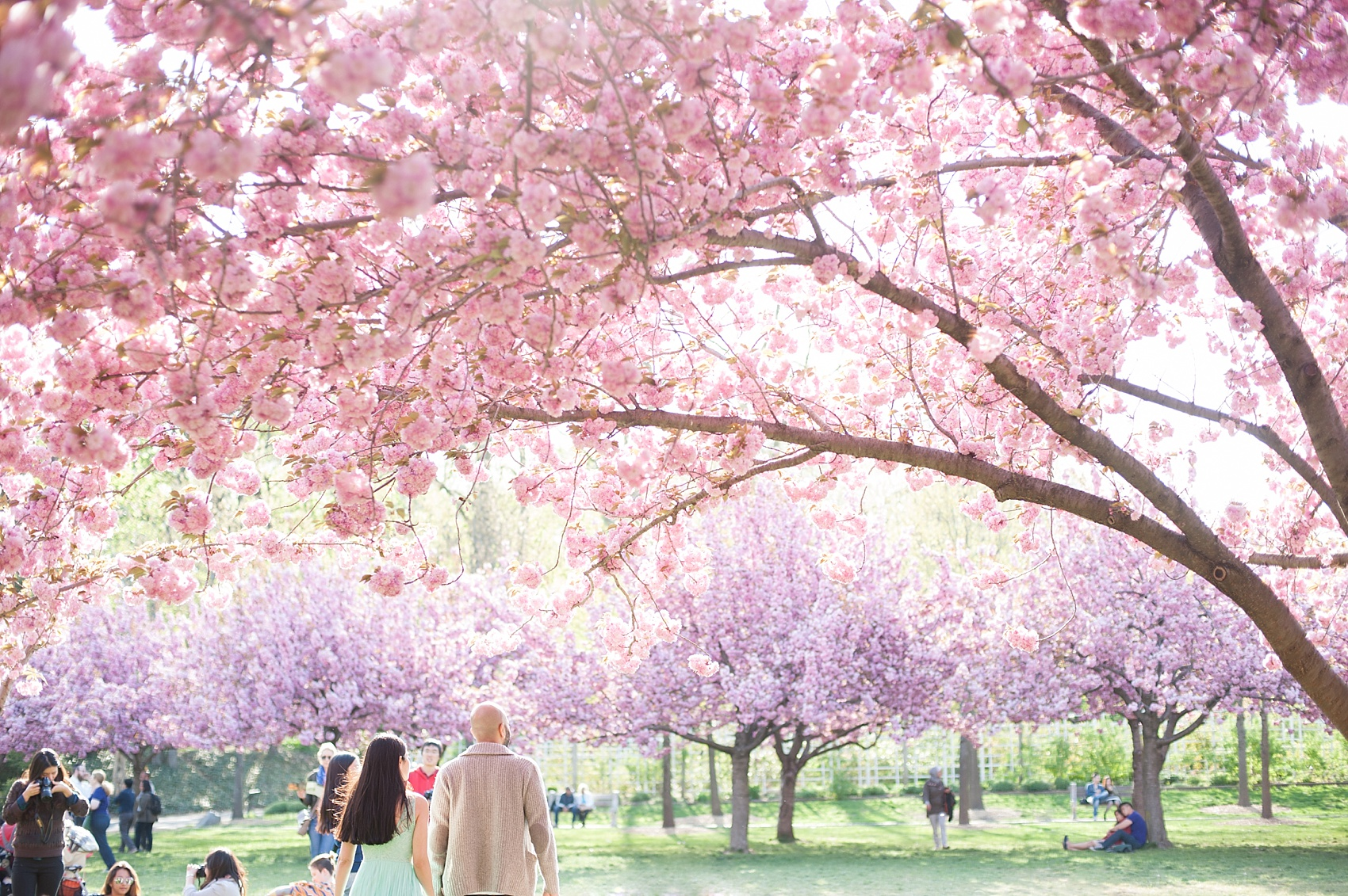 cherry blossoms engagement session at brooklyn botanic garden with images by mikkel paige photography