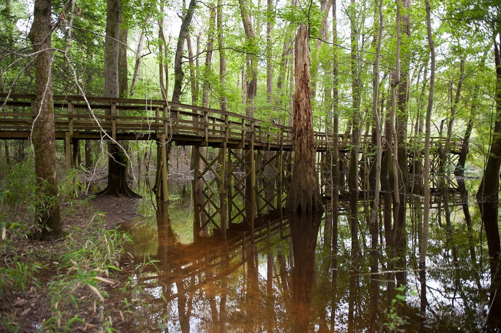 Travel: Congaree National Park | Raleigh and NYC Wedding ...