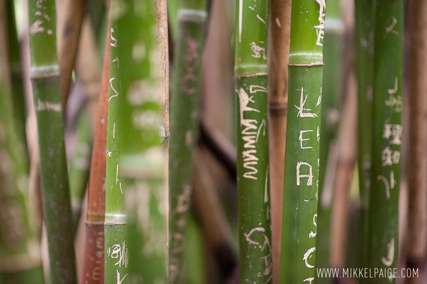 Magnolia Plantation Photos • Charleston, SC Wedding Photographer ...