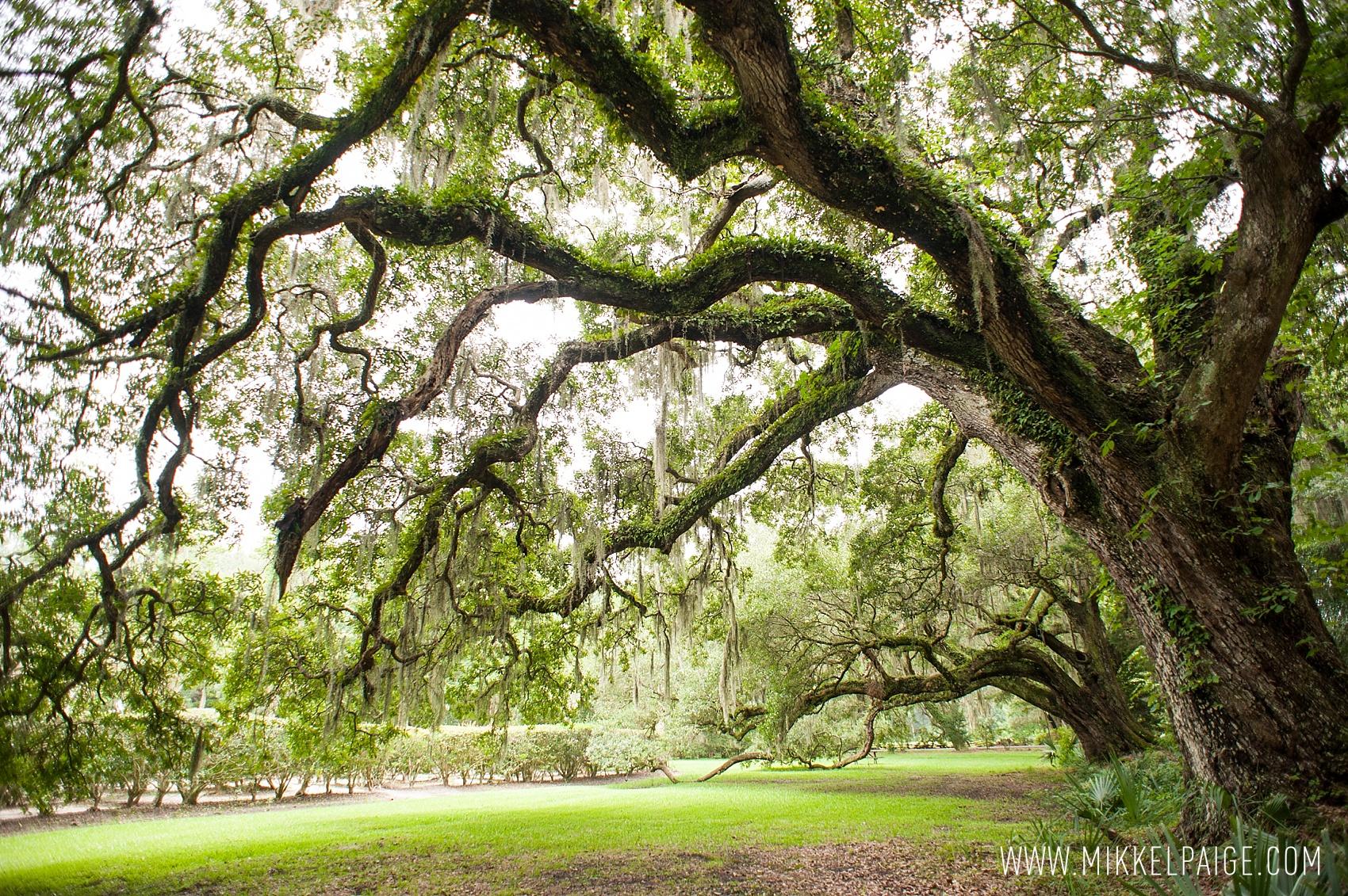 Magnolia Plantation Photos O Charleston SC Wedding