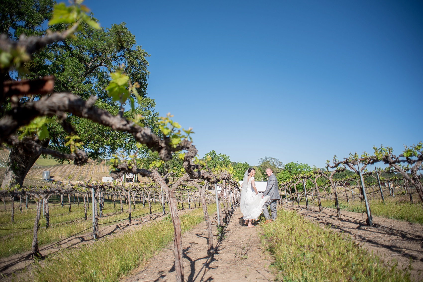 Vineyard elopement, bride and groom photos, with Mikkel Paige, destination wedding photographer. Held at HammerSky Vineyard, south of San Francisco.