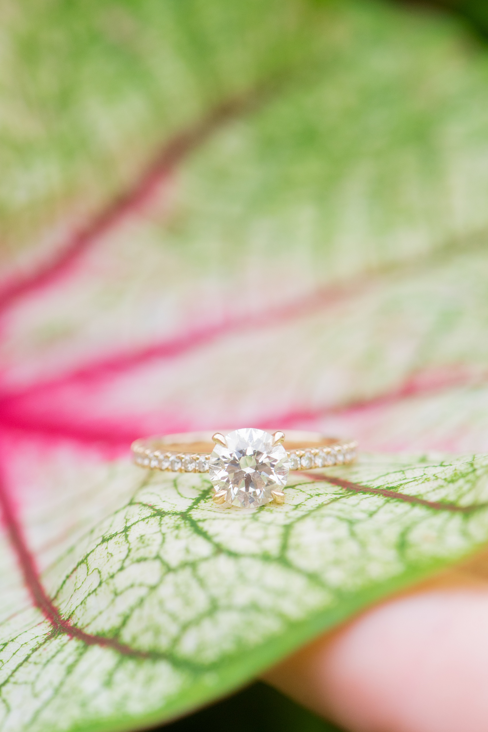 Mikkel Paige Photography photos from an engagement session at Durham's American Tobacco Campus in North Carolina. Detail picture of the bride's diamond ring on a colorful leaf.