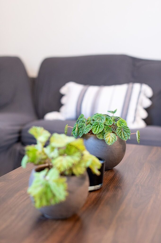 Plants on a wood coffee table with a dark grey couch behind it in a groom's suite, at The Graham Mill in NC.