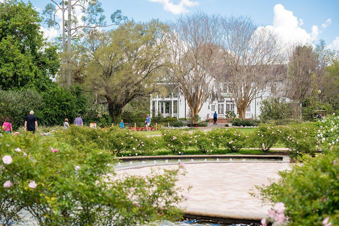 Rose garden at Leu Gardens, one of the best wedding venues in Orlando.